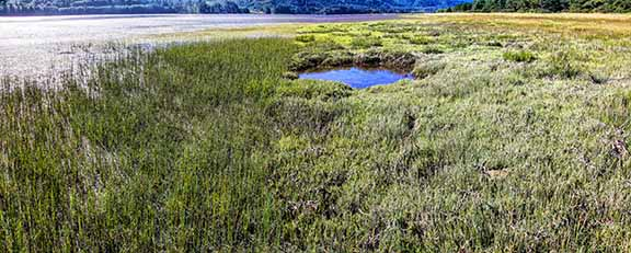 Salt-Marsh-1b_Panorama1