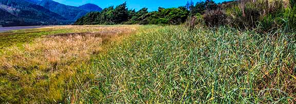 Salt_Marsh_3a_Panorama1